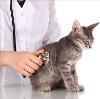Ветеринарные клиники в Арбаже